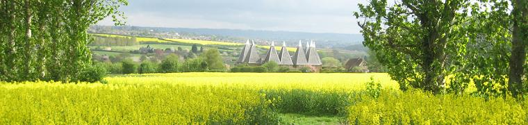 Rapeseed field in East Farleigh - Photo by Ian Wilkinson